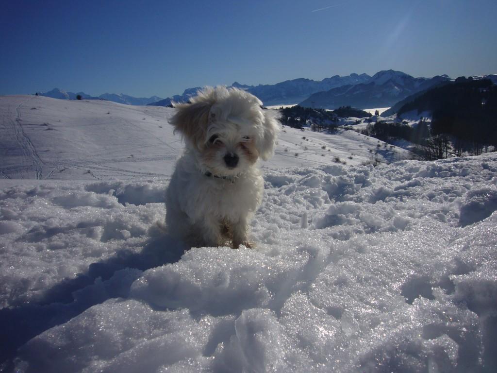 Gratuitous puppy pic